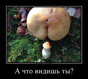 tmb_demotivatorium_ru_a_chto_vidish_ti_61539