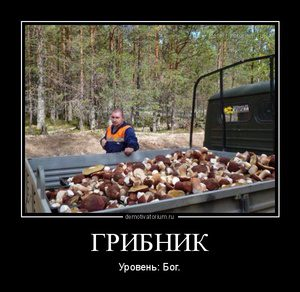tmb_demotivatorium_ru_gribnik_96776