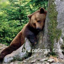 Прикольные картинки про работу с животными (22 фото)