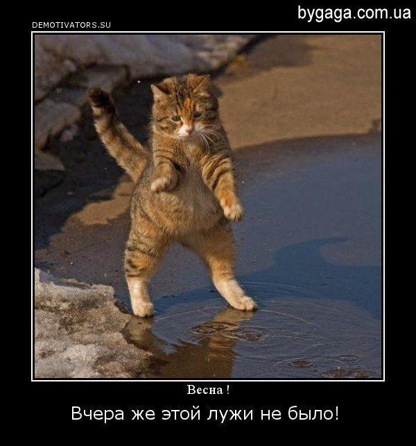 1331475979_demotivator_vesna_-11