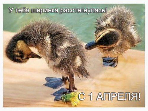 1364631958_prikoly-na-1-aprelya-26