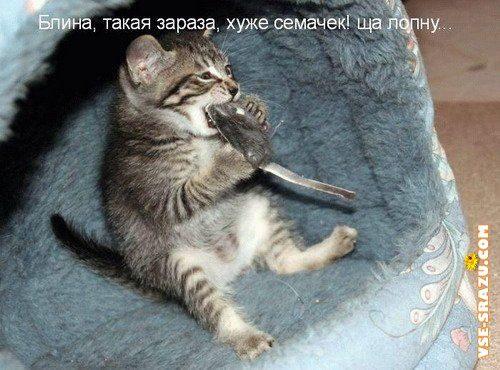 Картинки На Рабочий Стол Телефона Животные