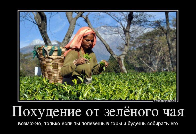 34476913_pohudenie-ot-zelyonogo-chaya