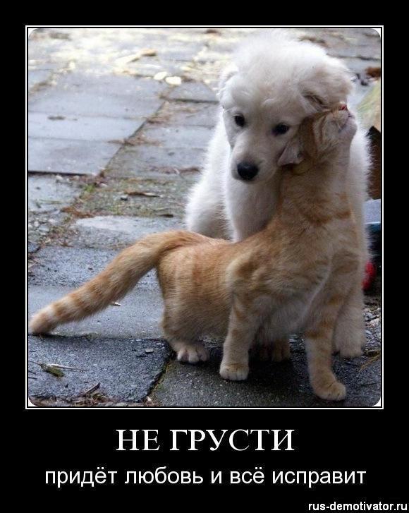 Смешные картинки против грусти