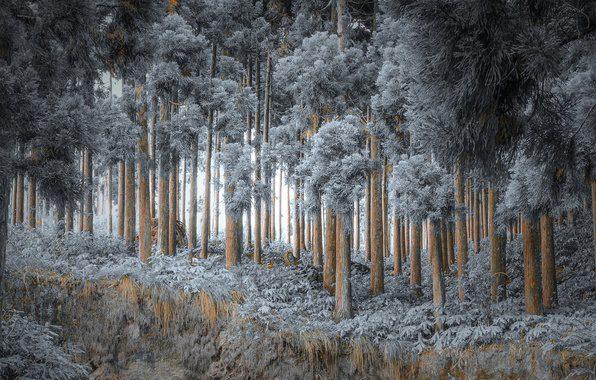 les-zima-priroda-1
