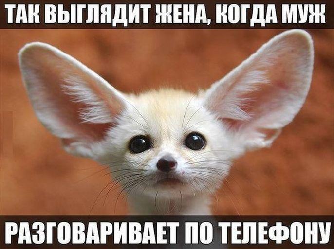 tak-vyglyadit-zhena-kogda-muzh-razgovarivaet-po-telefonu-list