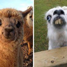 Прикольные картинки про животных онлайн бесплатно (44 фото)