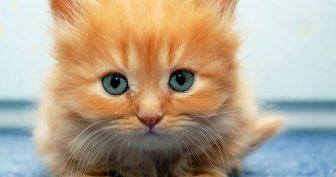 Самые прикольные картинки про котят (69 фото)