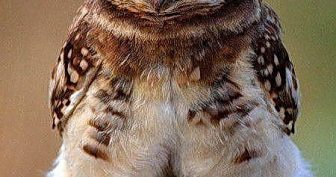Прикольные картинки про животных с надписью новые (35 фото)