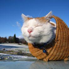 Прикольные картинки про животных коты (95 фото)