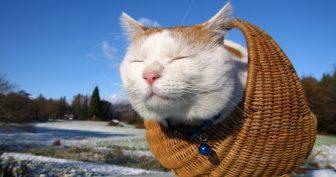 Прикольные картинки про животных коты (65 фото)