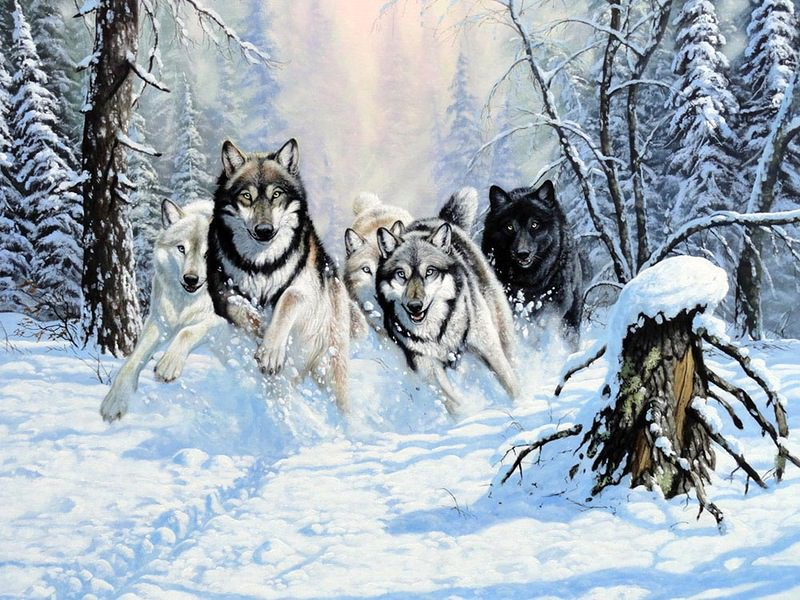Лошади зимой красивые фото
