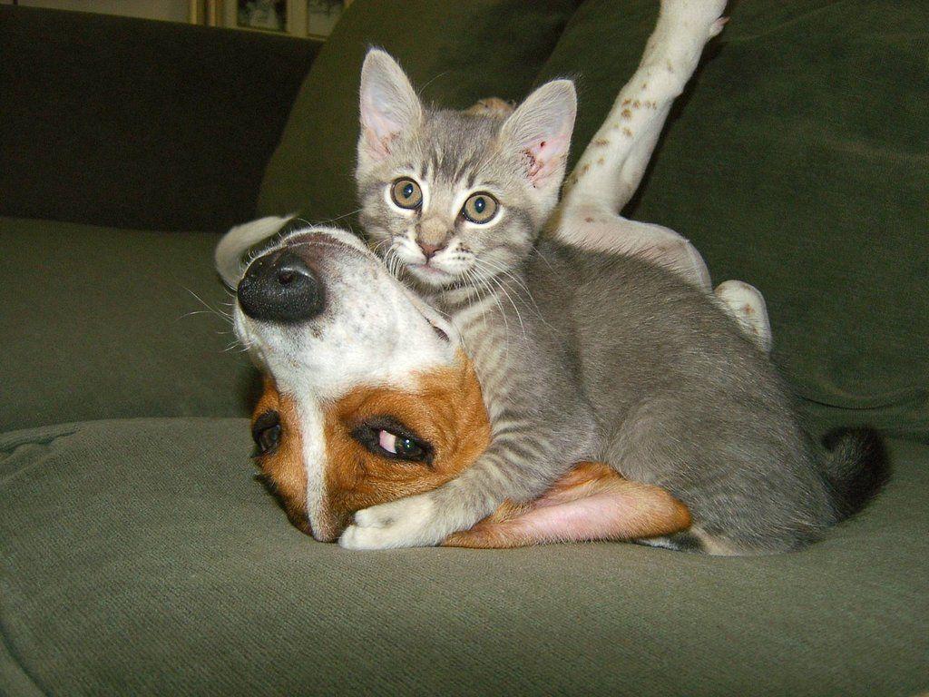школу, картинки про животных смешные кошки никак