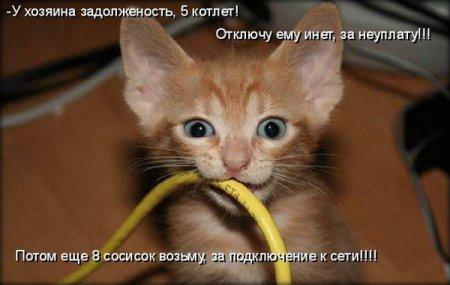 Котенок грызет провод