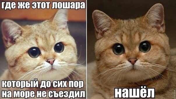 ошибаетесь. минет от русской в машине РАБОТАЕТ!!!!!! СпаСИБО