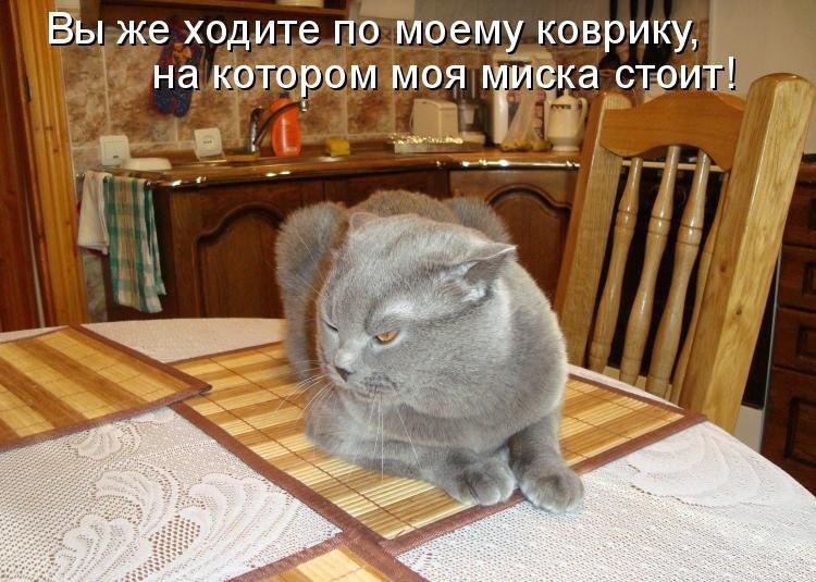 Смешные картинки с котиками и надписями про поведение