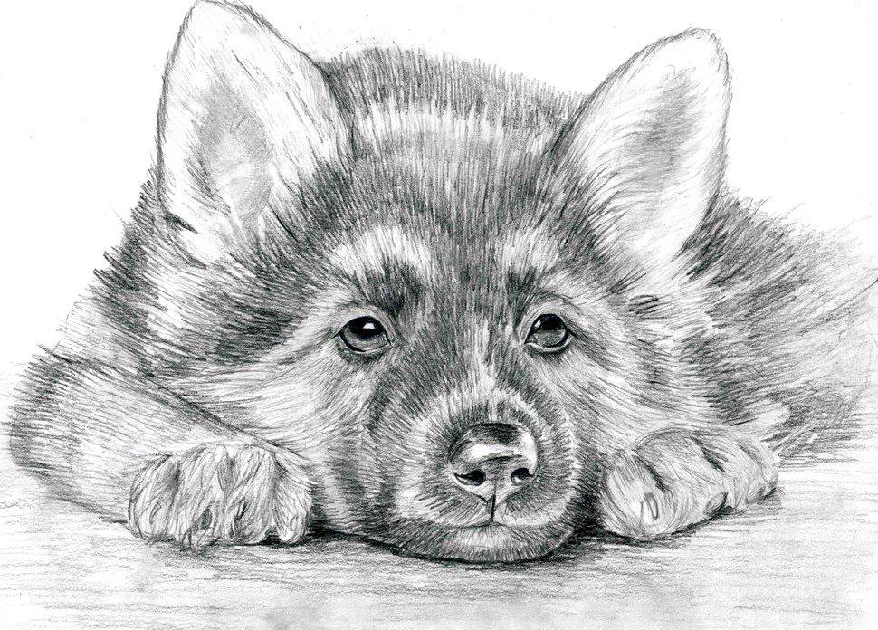 Прикольные картинки про животных рисованные (35 фото ... Прикольные Нарисованные Картинки ЖиВоТнЫх