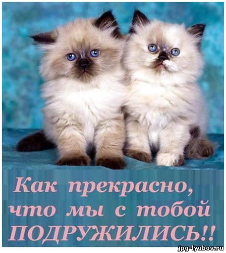 Лучшие поздравления самому лучшему другу от подруги