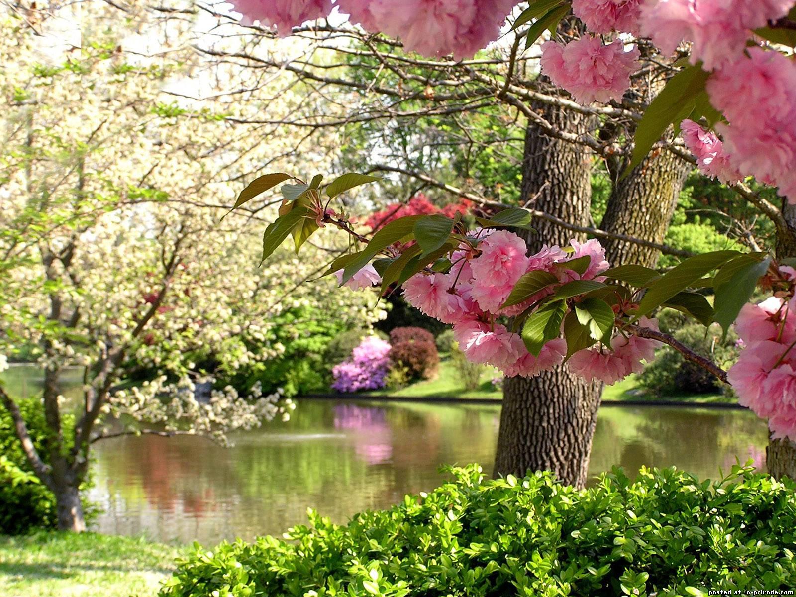картинки весна красивые пейзажи блоков