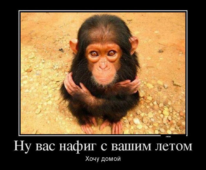 самый смешной демотиватор про животных