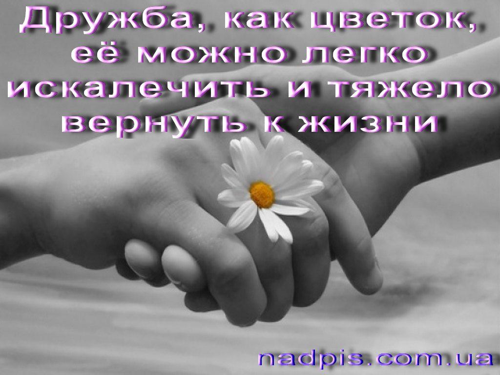 картинка с надписью о любви и дружбе