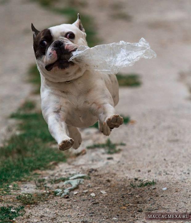 Скачать прикольные картинки про собак (38 фото ... Милый Щенок Хаски