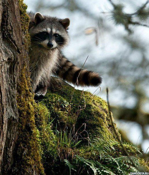 Прикольные картинки про животных на телефон (34 фото ... Милый Щенок Хаски