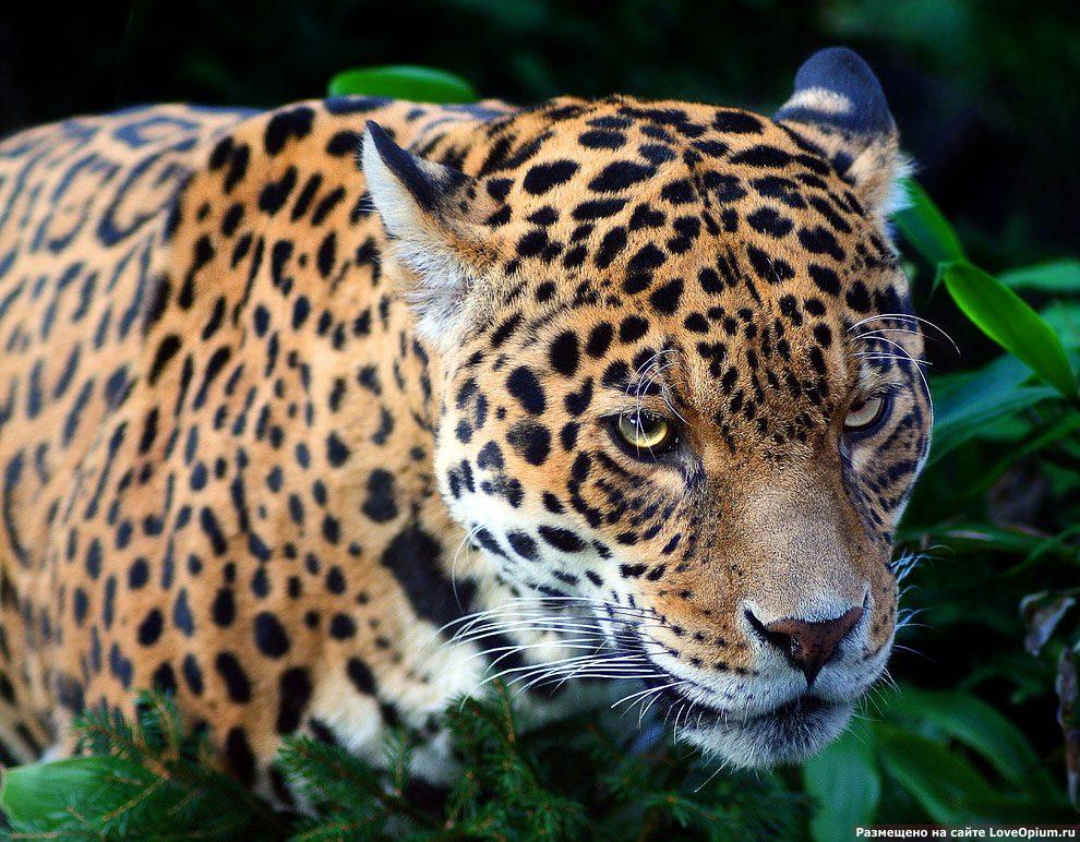 самые красивые животные фото и картинки кафедральный