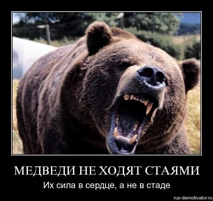 Медведи картинки милые