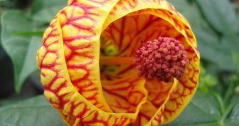 Красивые картинки цветы (39 фото)