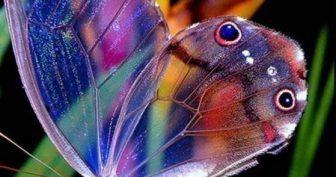 Красивые картинки бабочки (36 фото)