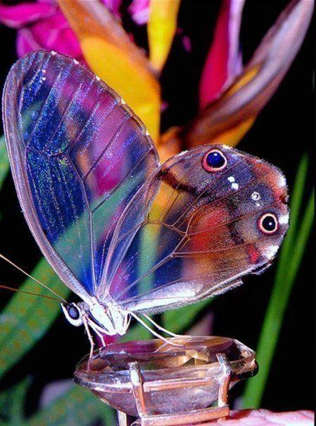 прекрасные бабочки