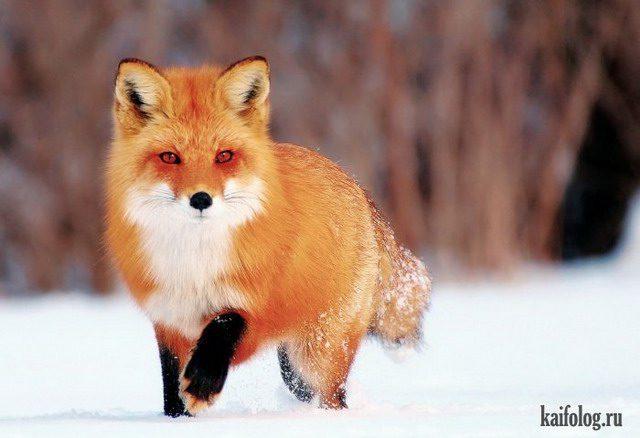 Красивые картинки животных (44 фото) • Прикольные картинки ... Прикольные Нарисованные Картинки ЖиВоТнЫх