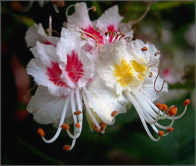 Фото яркий букет цветов