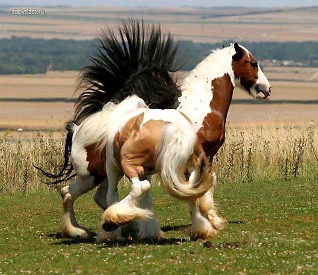 Бабы и кони бесплатно