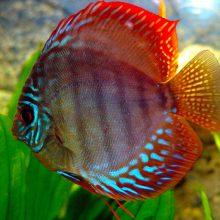 Красивые картинки про рыбок (38 фото)