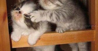 Картинки про кошек и котят прикольные (35 фото)