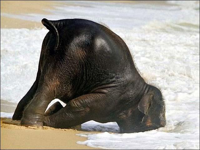 Картинки по запросу слон фото