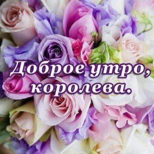 Фото красный роза