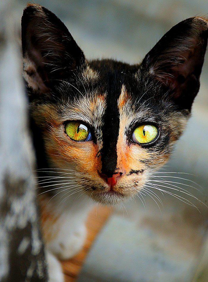 картинки необычного кота натюрморт легкими розами