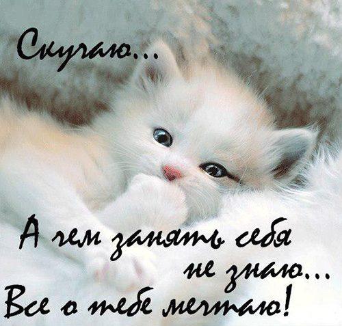 Болезни глаз у кошек - причины, симптомы и лечение (фото)