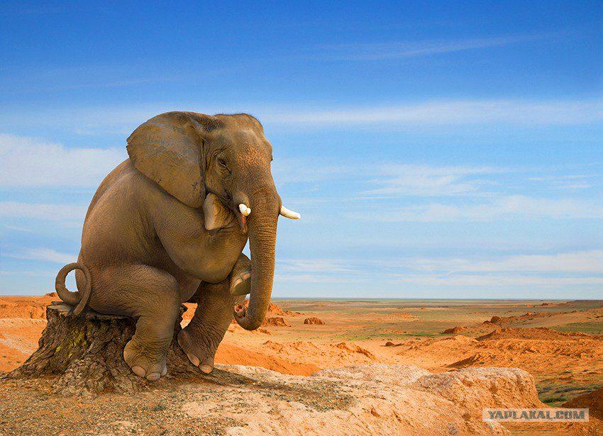 Картинка слоник на хоботе
