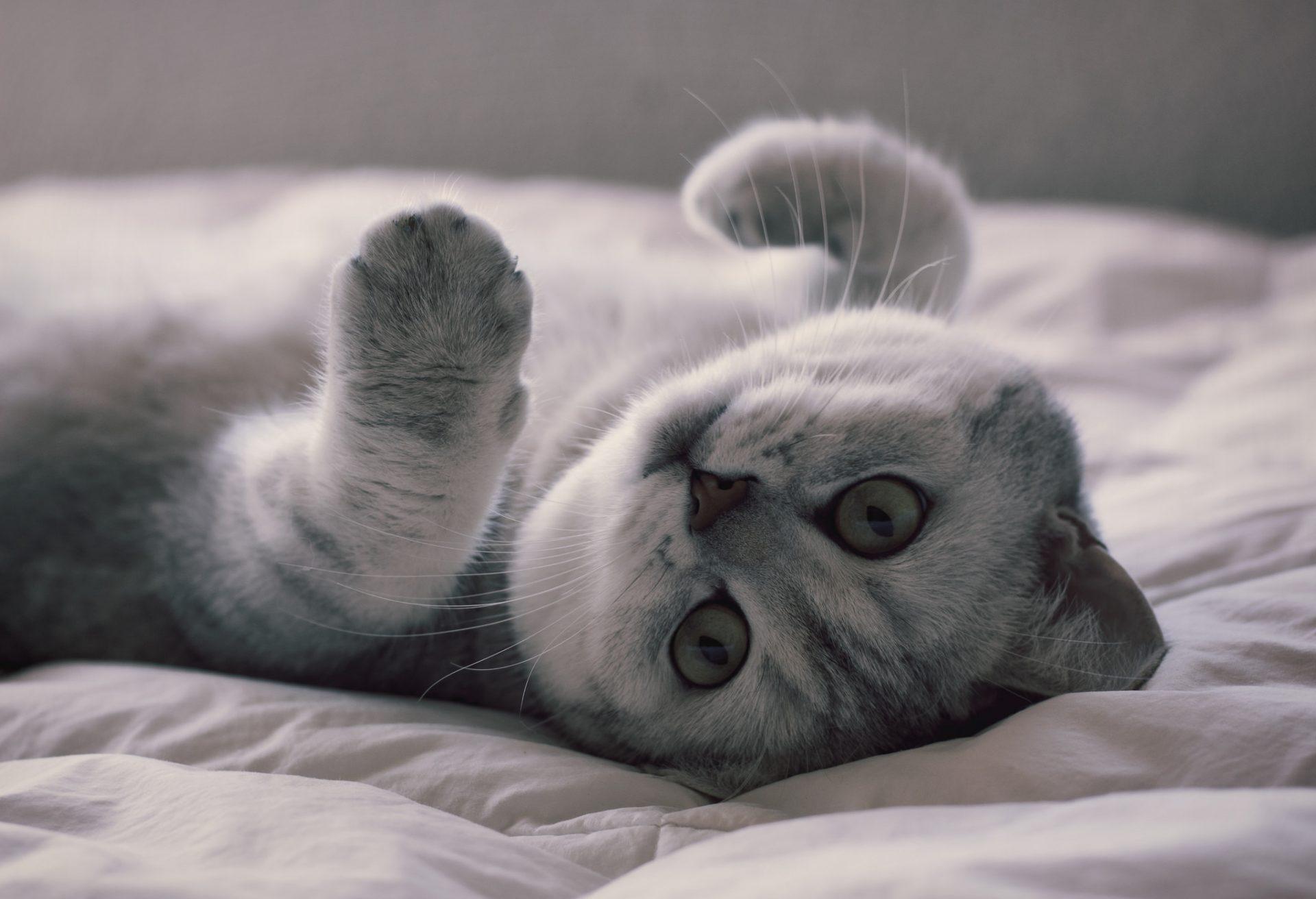Фото на рабочий стол кошки