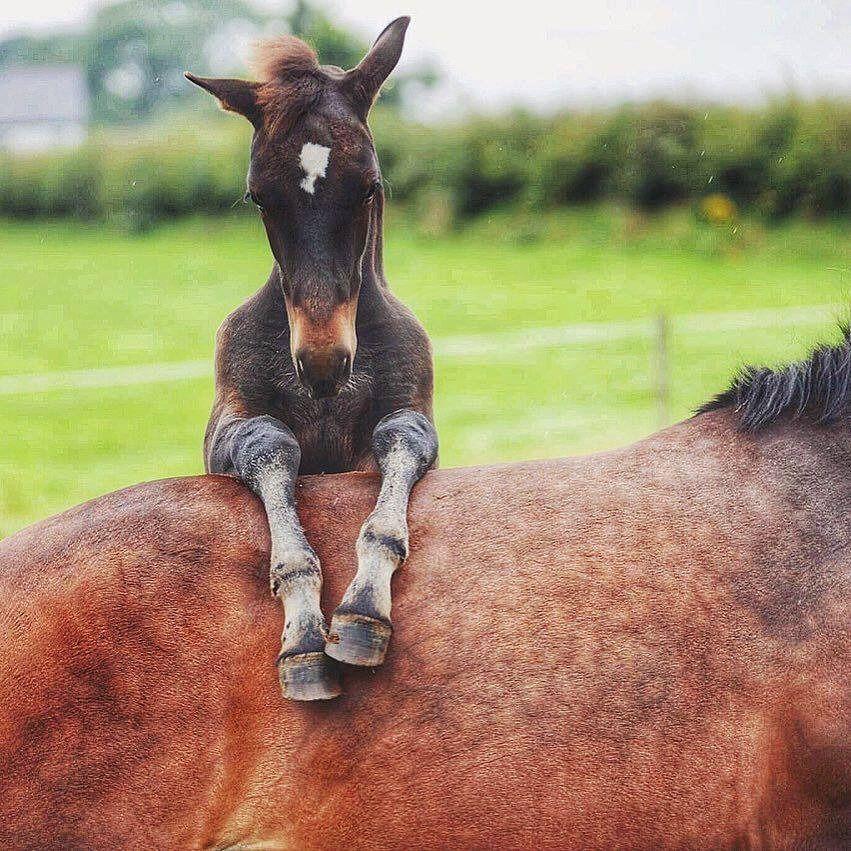 Прикольная картинка с лошадкой