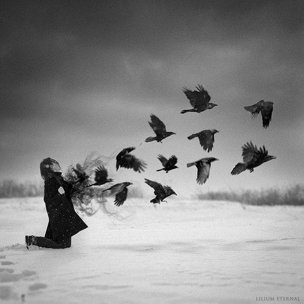 Вороны фото птицы