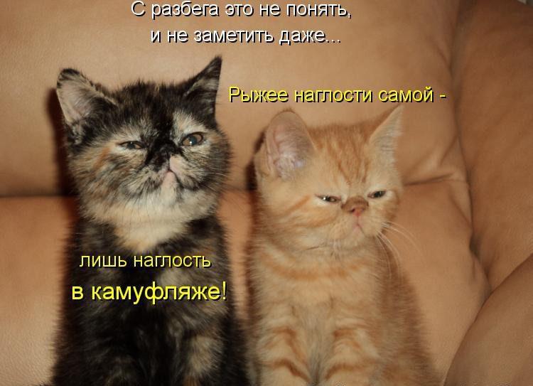 Смешные картинки про кошек фото с надписями