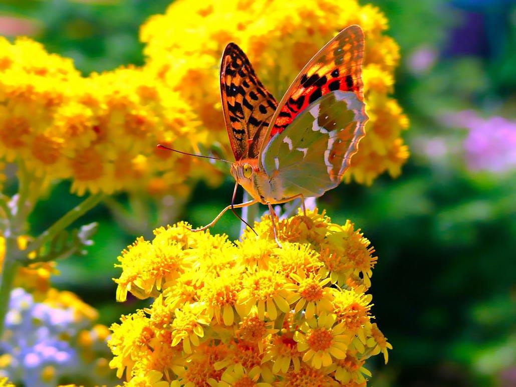 Природа на весь экран цветы