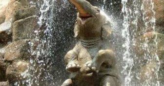 Картинки прикольные про слонов (35 фото)