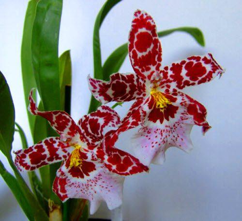 Самые красивые цветы с именами