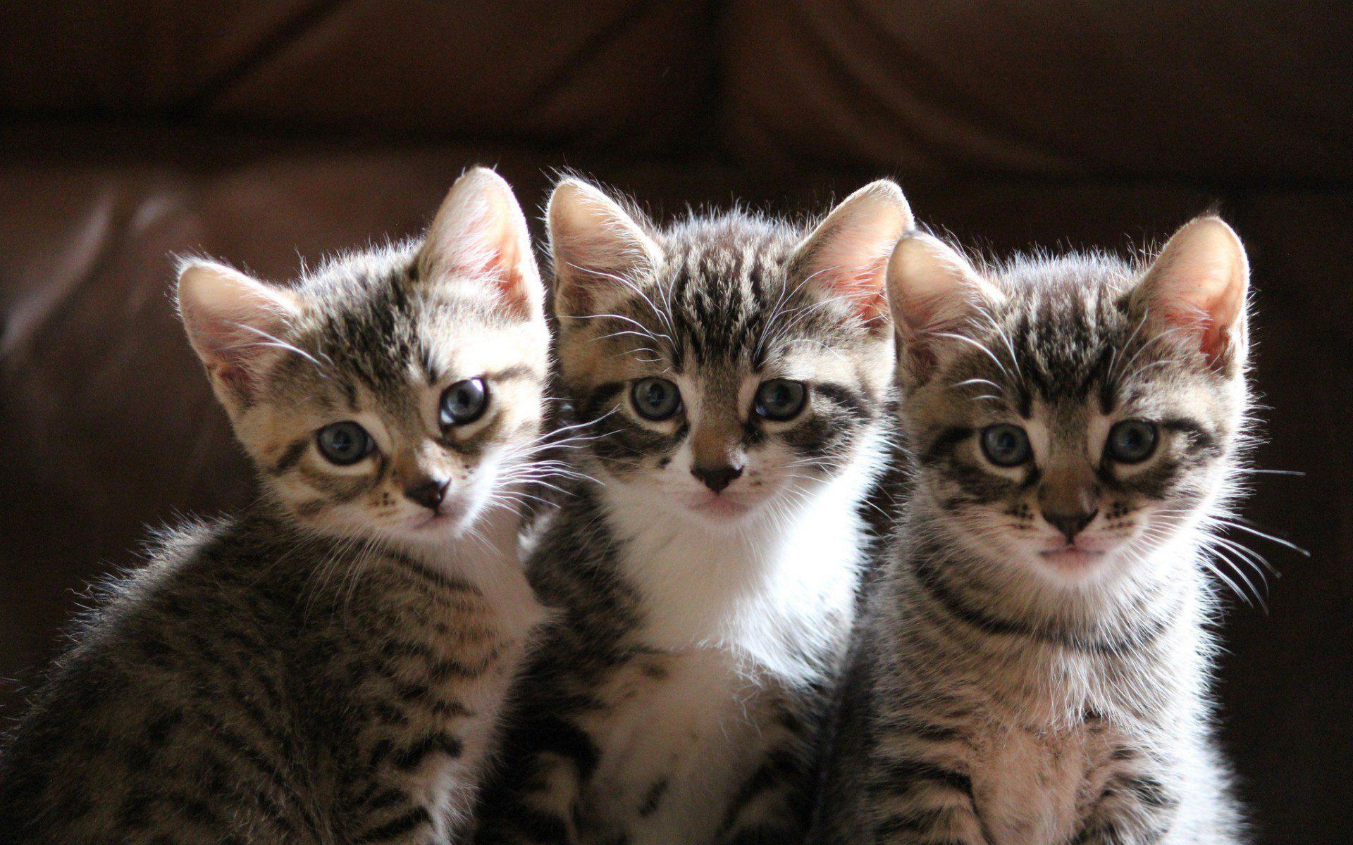 как разместились покажи мне картинки котиков беспокоиться